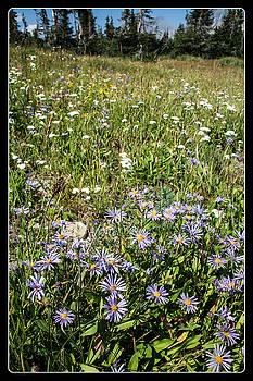 Mick Anderson - Wildflowers At Logan Pass