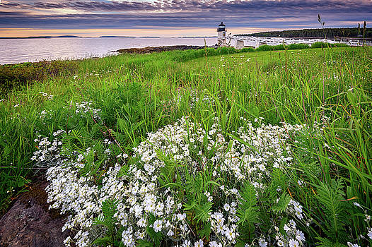 Wildflowers at Marshall Point by Rick Berk