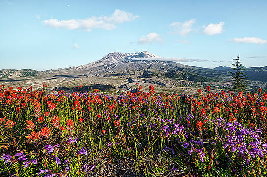 Wildflowers at Mount St Helens by Wes and Dotty Weber