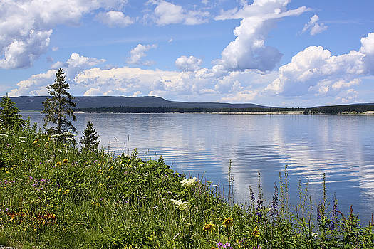 Teresa Zieba - Wildflowers at Yellowstone Lake