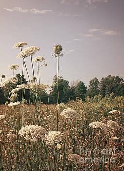Wildflowers by Audrey Wilkie
