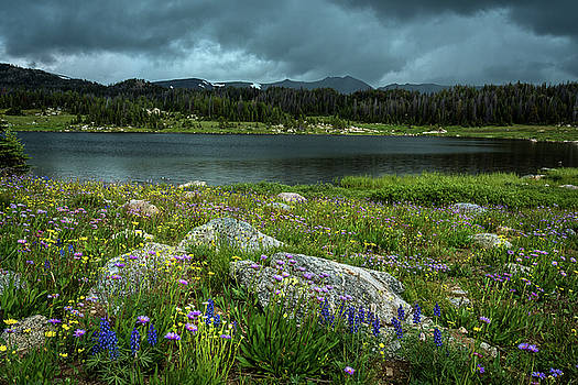 Rick Strobaugh - Wildflowers by the Lake