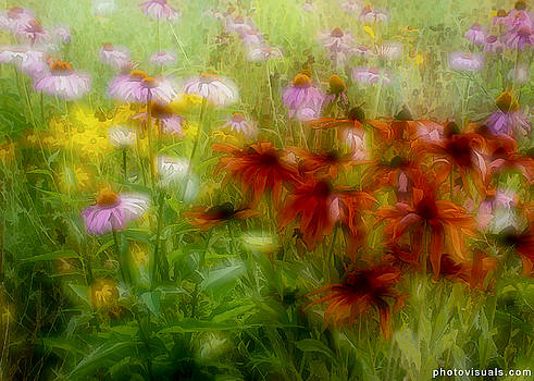 Wildflowers by David Hutchison