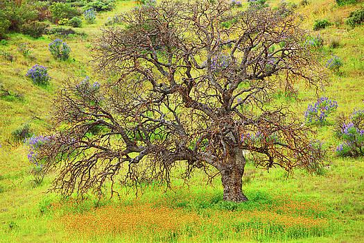Wildflowers flourishing Under Oak Tree by Ram Vasudev