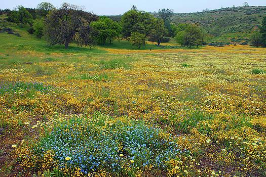 Wildflowers for ever by Ram Vasudev