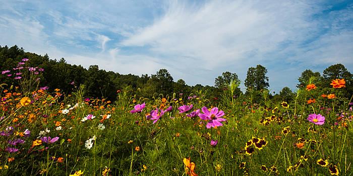 Wildflowers by Greg Dollyhite