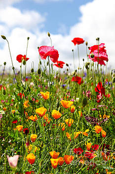 Wildflowers in a meadow on a sunny summers day by John Keates