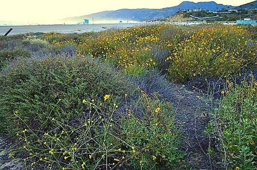 Tommi Trudeau - Wildflowers in Malibu