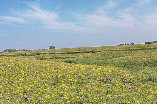 Susan Rissi Tregoning - Wildflowers in the Loess Hills