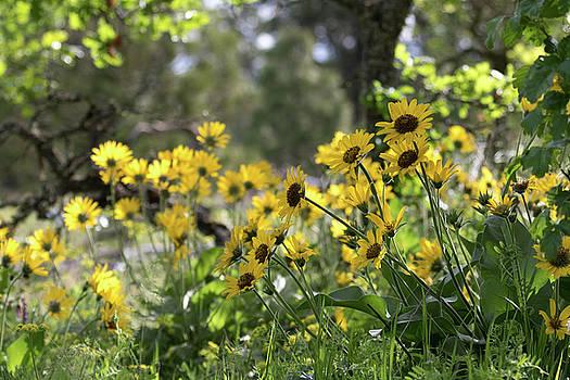 Dee Carpenter - Wildflowers in the Woods