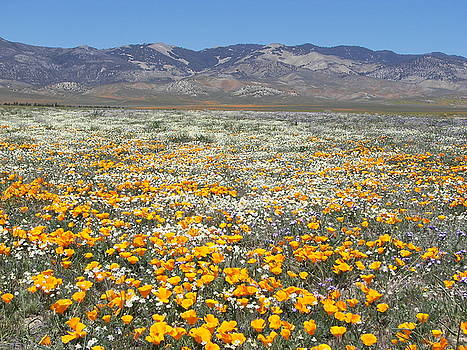 Wildflowers by Larry Holt