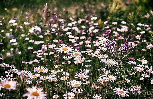 Wildflowers by Melanie Janzen