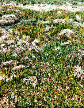 Wildflowers by Nina Nabokova