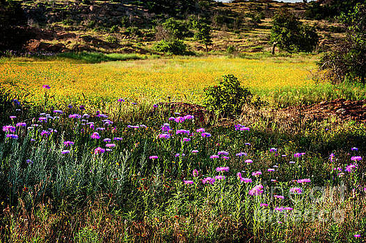 Wildflowers of the Wichita Mountains by Tamyra Ayles