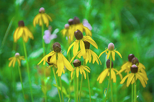 Wildflowers of Yellow by Bill Pevlor