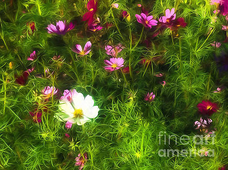 Kathleen K Parker - Wildflowers - Paint