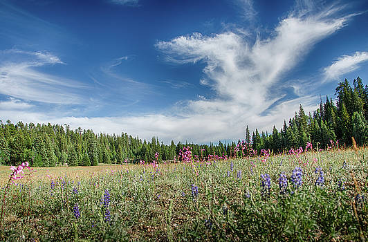 Wildflowers reach for the sky by Gaelyn Olmsted
