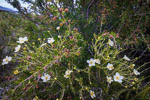 Scott Harris - Wildflowers