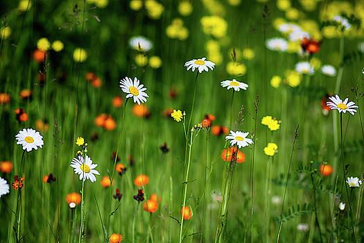 Wildflowers2 by Dan Hefle