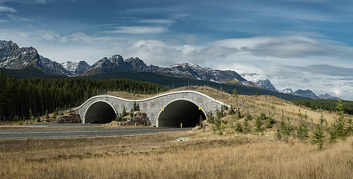 Wildlife Crossing Over the Trans Canada Highway by Steve Gadomski