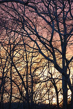 Wildwood  by Eddy Bateman