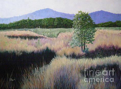 Willamette Evening Shadows by Lynn Quinn