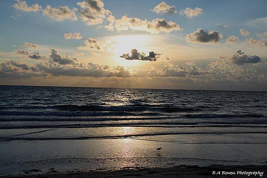 Barbara Bowen - Willet walking along the beach at Sunset