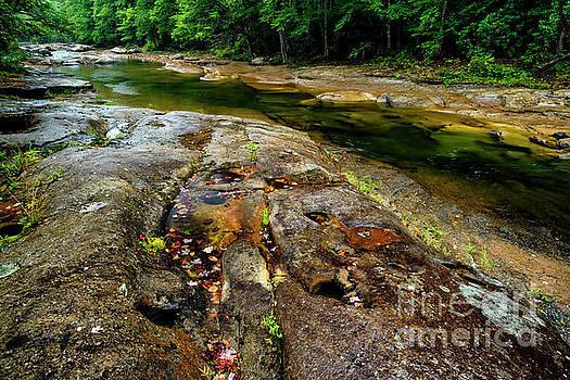Williams River Downstream by Thomas R Fletcher