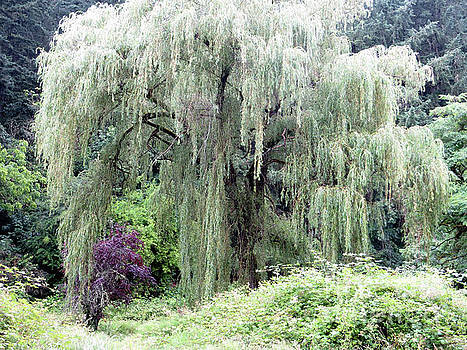 Willow 1 by Adrian March