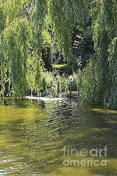 Willow by Andy Thompson