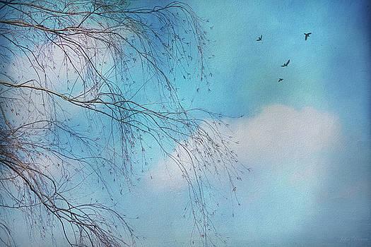 Willow Dreams by John Rivera