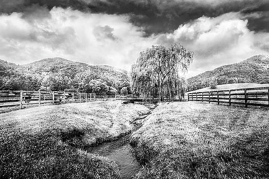 Willow in Early Autumn Black and White by Debra and Dave Vanderlaan
