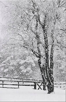 Willow in Winter by Linda Drown