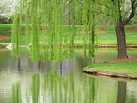Willow Reflection by Jeremy Allen