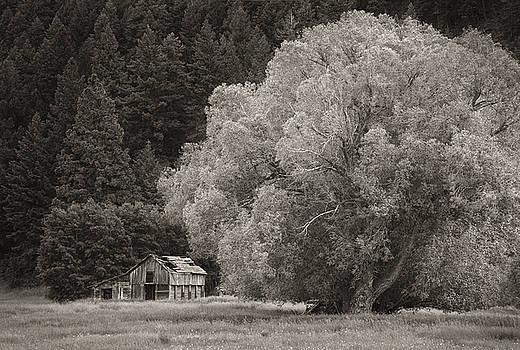 Scott Wheeler - Willow Tree and Barn