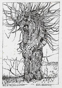 Martin Stankewitz - willow tree ink drawing
