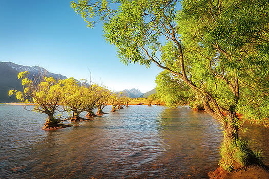 Willow trees glowing in the sun light at Glenorchy Wharf by Daniela Constantinescu