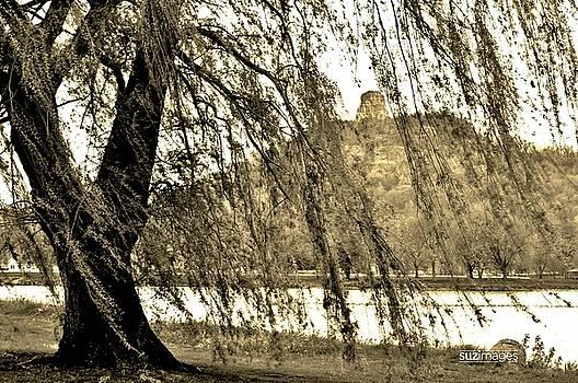 Willow Wind by Susie Loechler