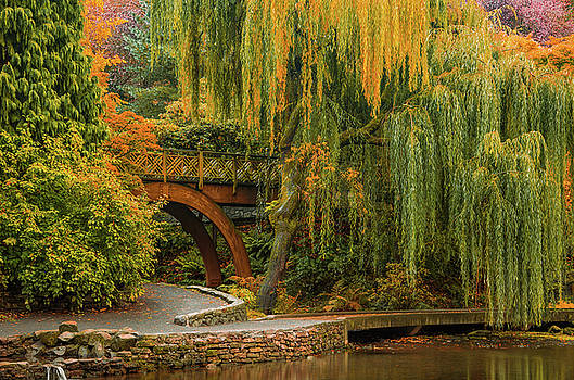 Willow Over the Pond by Don Schwartz