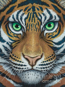 Wils Eyes Tiger face by Tish Wynne