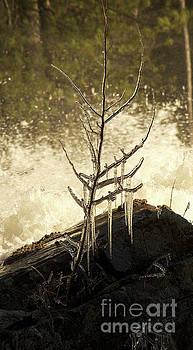 Elaine Mikkelstrup - Wilsons Falls Spring