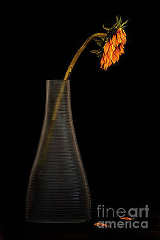 Wilting by Serge Chriqui