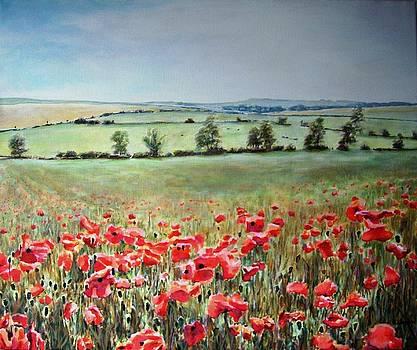 Wiltshire Poppy Field by Andy Lloyd