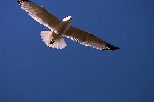 Clayton Bruster - Wind Beneath My Wings
