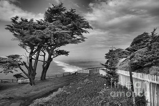 Adam Jewell - Wind Blown At Point Reyes Black And White