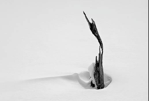 Wind Break by Gordon Ripley