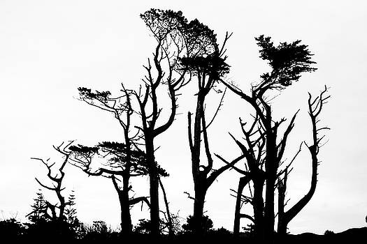 Wind damaged trees in silhouette by Russ Dixon