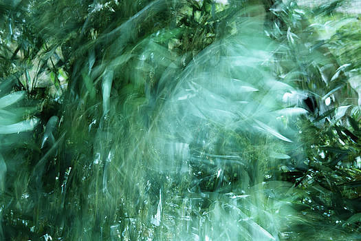Wind in Olive Grove by Zina Zinchik