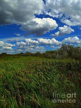 Wind in the cattails by Annie Gibbons