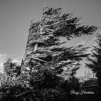 Wind Shaped Tree by Roxy Hurtubise